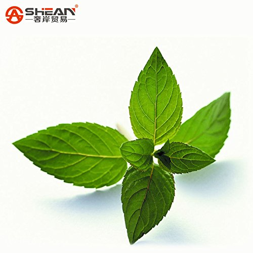 Plante Vert menthe Graines de légumes balcon en pot Menthe Graines plantes aromatique Environ 200 pièces/Lot)