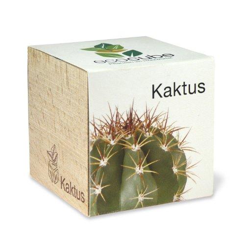 Extragreen Kaktus Cubes von Feelgreen Holzwürfel