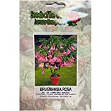 Brugmansia rosa (Datura) (Semente)