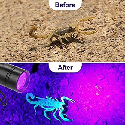 (2 Pack) UV Torch, Fulighture Pets Black Light 12LED 395nm, Dogs/Cats Urine Detector, Ultraviolet Flashlight Find Dry Stains on Carpets/Rugs/Floor with Batteries Included 2