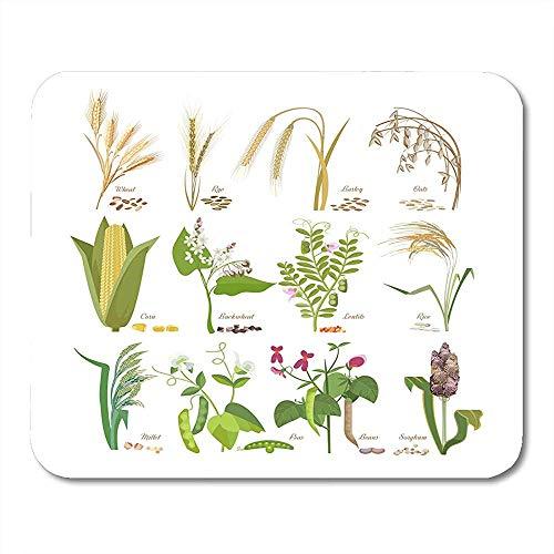 QDAS Mauspads Getreide-und Hülsenfrucht-Korn-Pflanzen mit Blatt-Blumen-Samen-Weizen-Roggen-Hafer-Mais-Hirse-Mausunterlage für Notizbücher Computer