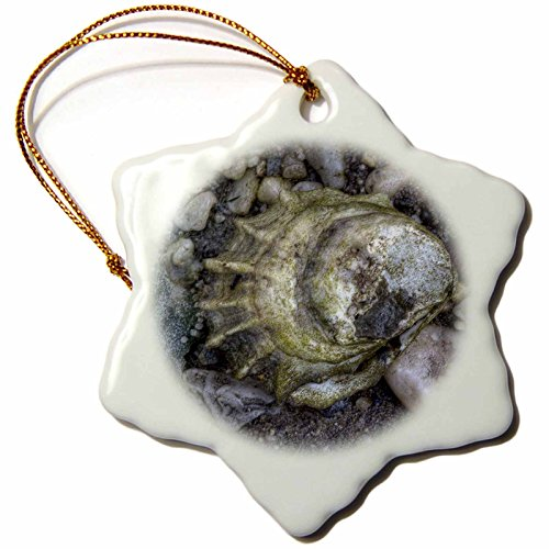 3dRose 'Oyster Shell, Close Up' Snowflake Ornament, Multi-Colour, 3-Inch