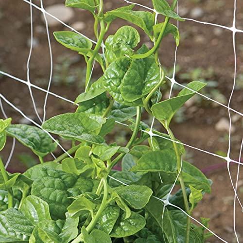 David's Garden Seeds Greens Leafy Spinach Malabar Green SAL9322 (Green) 100 Non-GMO, Open Pollinated Seeds