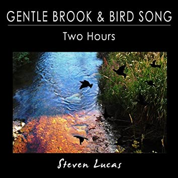 Gentle Brook and Bird Song - Two Hours