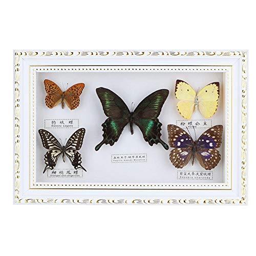 Wifehelper Exquisita Muestra de Insecto de Mariposas Regalo Hecho a Mano para Amigos Decoración del Hogar Adorno Mariposa Arte de la Pared(Blanco)