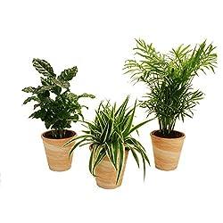 Ungiftige pflanzen f r katzen eine umfangreiche sammlung - Katzen giftige zimmerpflanzen bilder ...