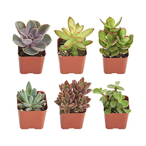 Up to 42% Off Succulents **Today Only**