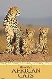 Disney Nature - African Cats - Tier-Poster Raubkatzen