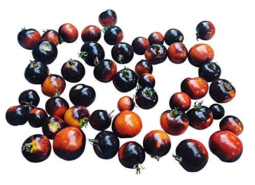 Indigo Rose 10 graines -La variété de tomate légèrement différente avec la couleur violette- *** Très en bonne santé ***