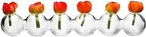 Chive-Caterpillar-Piccoli vasi in vetro trasparente per fiori - 6palline e basso profilo - forma unica nel suo genere
