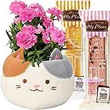 【Amazon限定ブランド】花のギフト社 母の日 カーネーション 三毛猫 鉢植え お菓子
