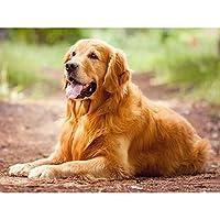 新しいダイヤモンド絵画5D動物フルドリルスクエアダイヤモンド刺繡犬の写真クロスステッチ家の装飾ギフト