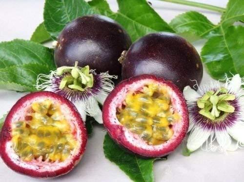 Passiflora edulis v. Edulis granadilla púrpura pasión COMESTIBLE semilla de la fruta 10 SEMILLAS