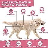 Zoom IMG-1 vitamine per cani 365 compresse
