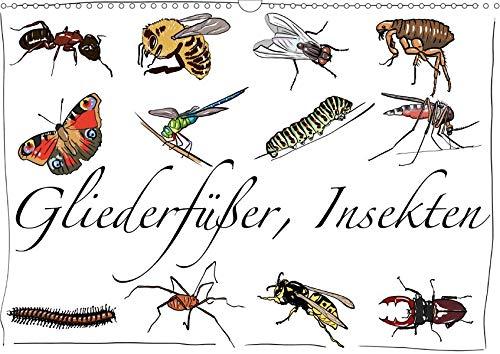 Gliederfüßer und Insekten (Wandkalender 2020 DIN A3 quer): Tierzeichnungen (Monatskalender, 14 Seiten ) (CALVENDO Tiere)