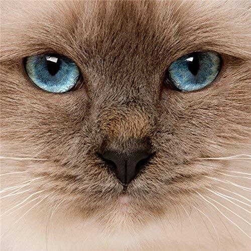 Mascota gato pintura de diamantes gato punto de cruz bordado de diamantes animal diamante mosaico rhinestone kit de decoración del hogar A4 40x50cm