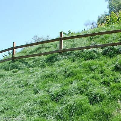 Creeping Red Fescue Grass Max 90% OFF Seed Cheap rubra Lbs. Bag Festuca 5