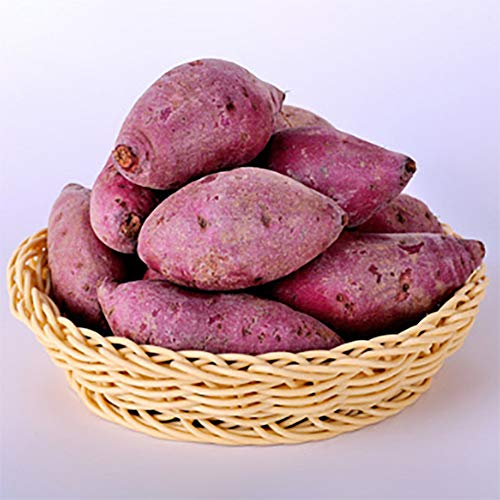 Qianren Semillas de Batata para Plantar, Semillas de Vegetales Patata Morada Planta...
