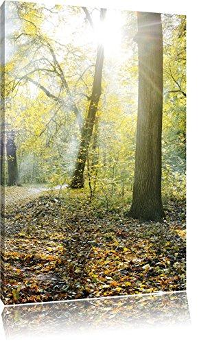 Pixxprint Sonnenstrahlen auf Waldlichtung als Leinwandbild   Größe: 100x70   Wandbild  Kunstdruck   fertig bespannt