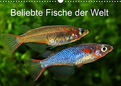 Beliebte Fische der Welt (Wandkalender 2021 DIN A3 quer)