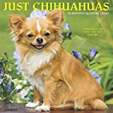 Just Chihuahuas 2020 Calendar: Chihuahuas Are Small, but They Love Big