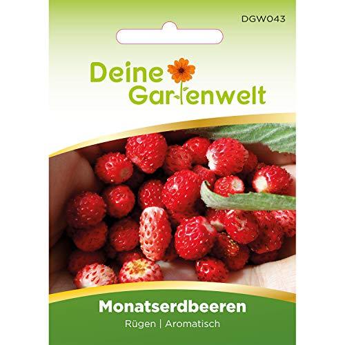 Monatserdbeeren Rügen   Samen für Erdbeeren   Erdbeersamen   Saatgut für Monats-Erdbeeren
