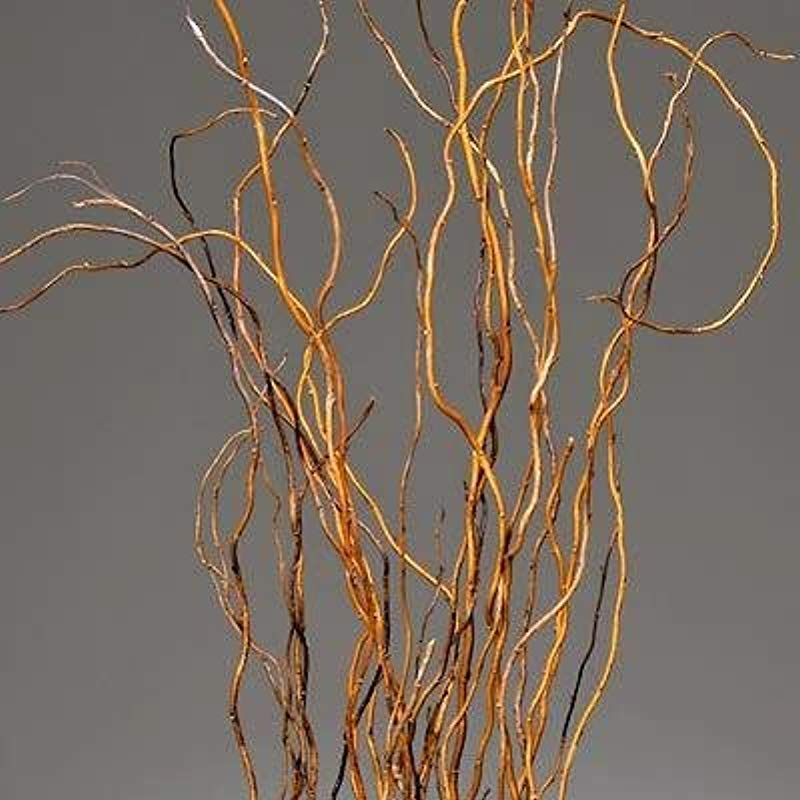 Dried Natural Light Brown Curly Willow Branches For Arrangements Long Stem 8 10 Stems Length 3 4 Feet Single Bunch Light Brown