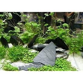 8 Bund Wasserpflanzen, 4 Töpfe Aquarienpflanzen + Wasserpflanzendünger