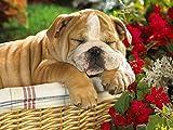 Rompecabezas de Madera 500 Piezas de Perro durmiendo Junto a Flores de Gran tamaño 500 Piezas de Rompecabezas de Madera, Decoraciones hogar 52x38cm