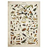 Buttferflies Vintage Poster Bienen Insekten Vögel Plumes