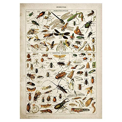 Buttferflies Vintage Poster Bienen Insekten Vögel Plumes Federn Eier Wand-deko Poster Und Drucke Leinwand-malerei