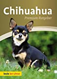 Chihuahua: Premium Ratgeber