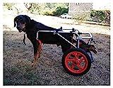 Silla de Ruedas para Perros,Ciclomotor Scooter para Mascota,Adecuado para Perro Discapacitado Paralizada Patas Traseras Rehabilitación Del Caminar Asistido,Ajustable,2 Ruedas,1.5kg(3.3lb)-50kg(110lbs)