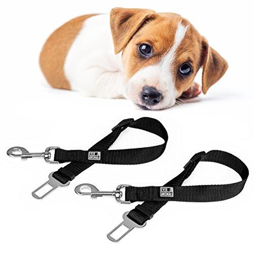 EVERANIMALS Cinturón de Seguridad para Perros, Correa para Perro ...