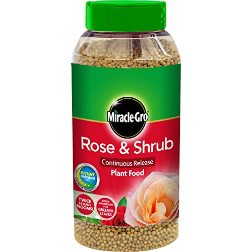 Scotts Miracle-Gro rejets continus aliments pour roses et arbustes