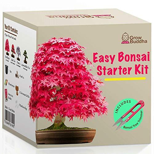 Grow Your Own Bonsai Tree - Kit de iniciación de semillas para principiantes con 4 tipos de árboles