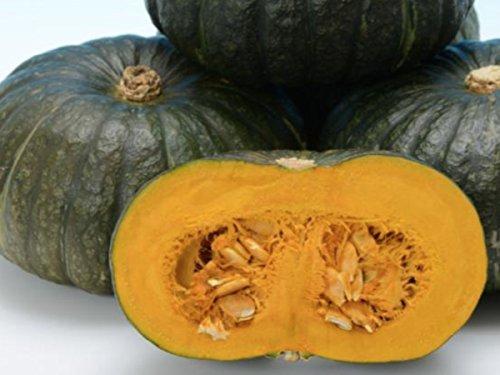 北海道産かぼちゃ 極早生大玉種 味早太 10kg (A品 7〜8玉入(10kg))