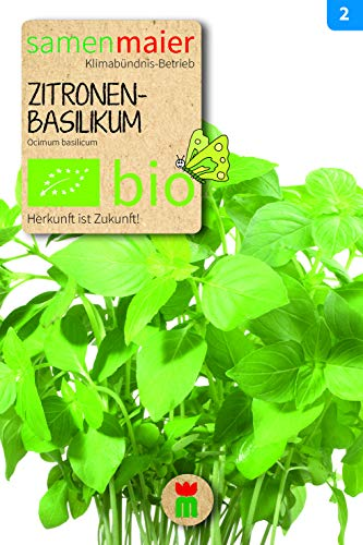 BIO Zitronenbasilikum (Ocimum basilicum)