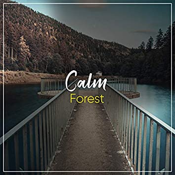 Calm Forest, Vol. 4