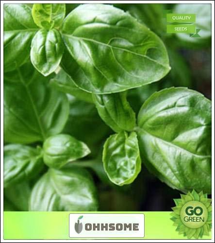 Pinkdose Herb piante di basilico greco Verde Media Foglie microgreens Seeds Pack - 0 semi di erbe piantare i semi 0 Semi orto Pack Seed