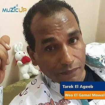 Wea El Gamal Mawal
