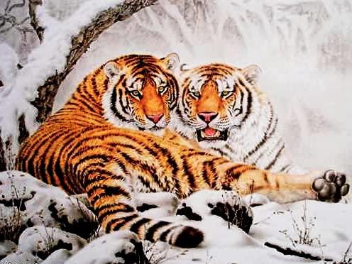 5D DIY Tigre imagen de diamantes de imitación bordado de diamantes mosaico de animales decoración del hogar pintura de diamantes A9 45x60cm