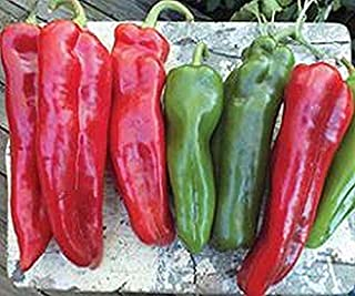 Bulk Sale (1000) Pepper Seeds - Plant them or re-sell them!! SALE SALE SALE(1000 - Early Jalapeno Pepper Seeds)