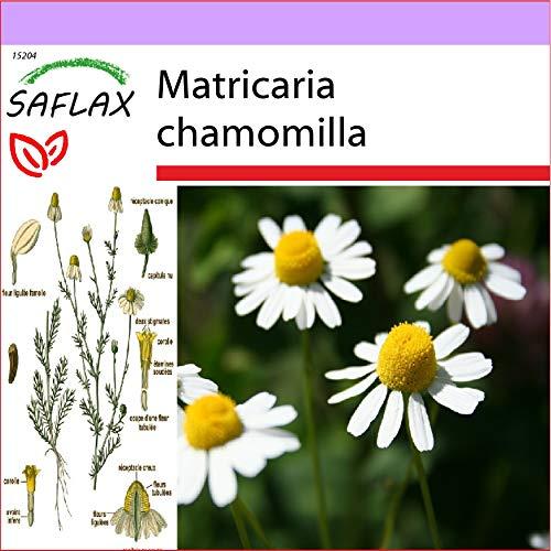 SAFLAX - Manzanilla común - 300 semillas - Matricaria chamomilla