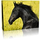 Dartmoor Prints and Gifts Black Horse Close Up Wall Art Canvas Art Print - Modern Art - Framed Ready to Hang (20 inch x 30 inch)