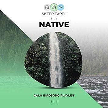 ! ! ! Calm Native Birdsong Playlist ! ! !