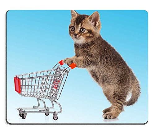 Comprar Gatos British