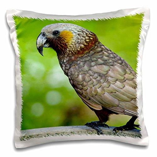 Danita Delimont - Birds - New Zealand, Stewart Island, Halfmoon Bay Kaka bird-AU02 FNO0780 - Fredrik Norrsell - 16x16 inch Pillow Case (pc_70652_1)