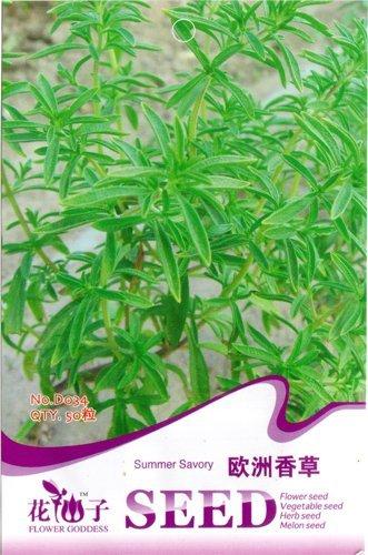 50 Summer Savory Graines bon goût et d'ornement beau jardin D034
