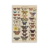 KFMD Vintage-Poster mit Schmetterlingen, Insekten,